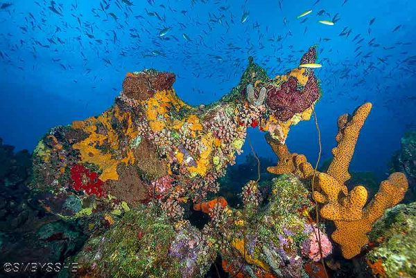 colorful reef with hard coral and sponges