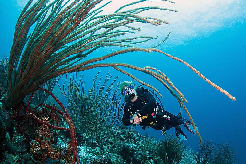 female diver enjoying the view of sea whips