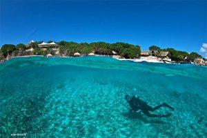 Alice in Wonderland Dive Site Curacao
