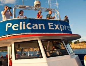 Pelican Express Boat Trips